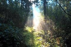 Het fazantenbosje - licht