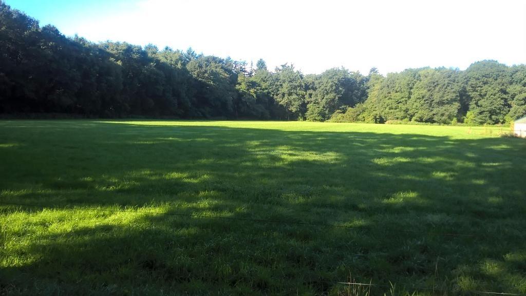 Bungalow midden in het bosgebied